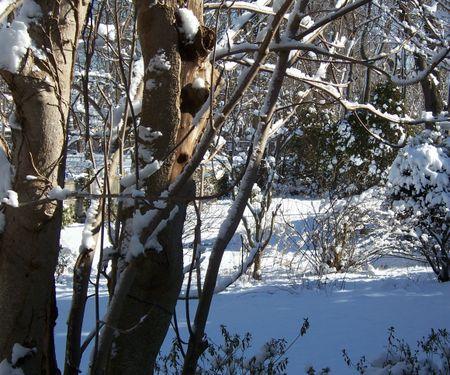 Snowbackyard