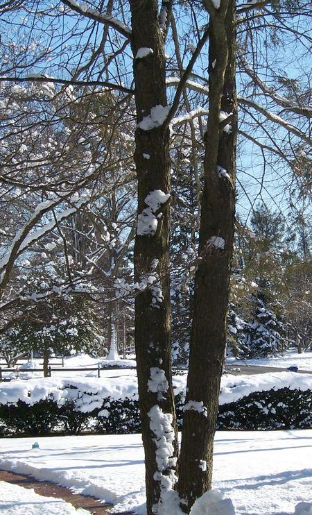 Snowyview2