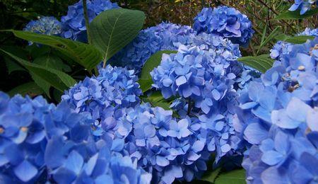 Blueh2