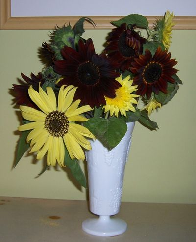 Vasesunflowers