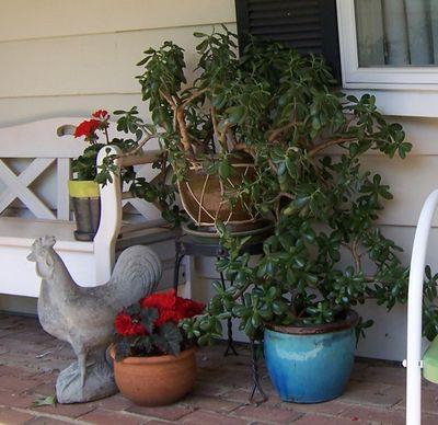 Jadeplantsrooster