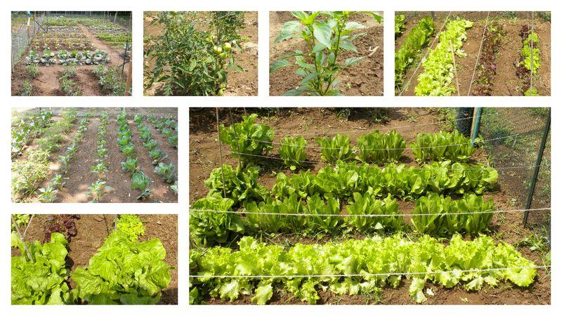 Garden 61210