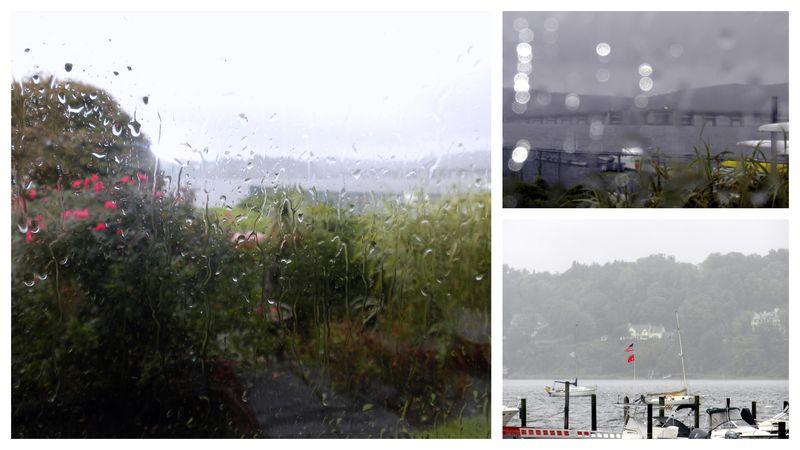 Rain,pinkpaper,familytree1