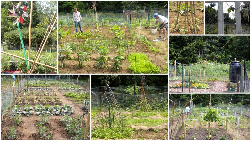 Communitygarden june 12
