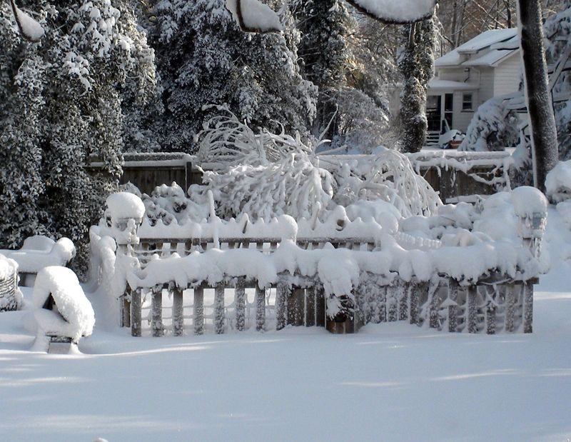 Snowgardencloseup