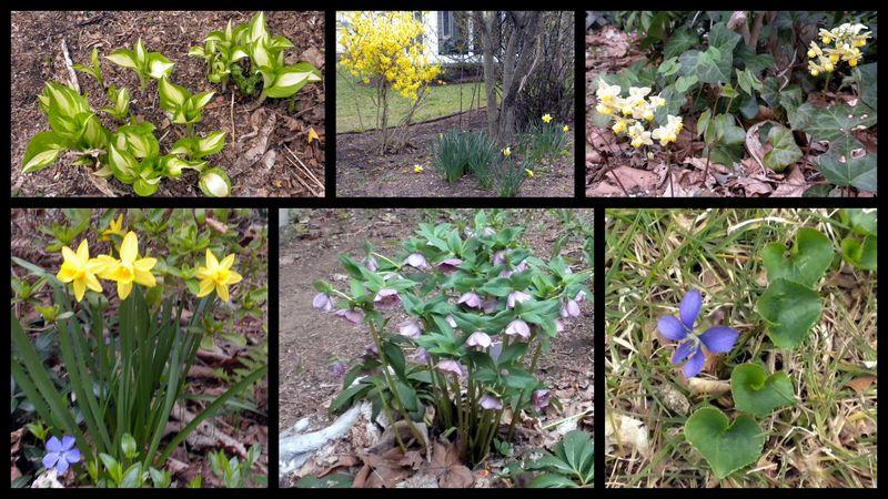 Spring2011flowering