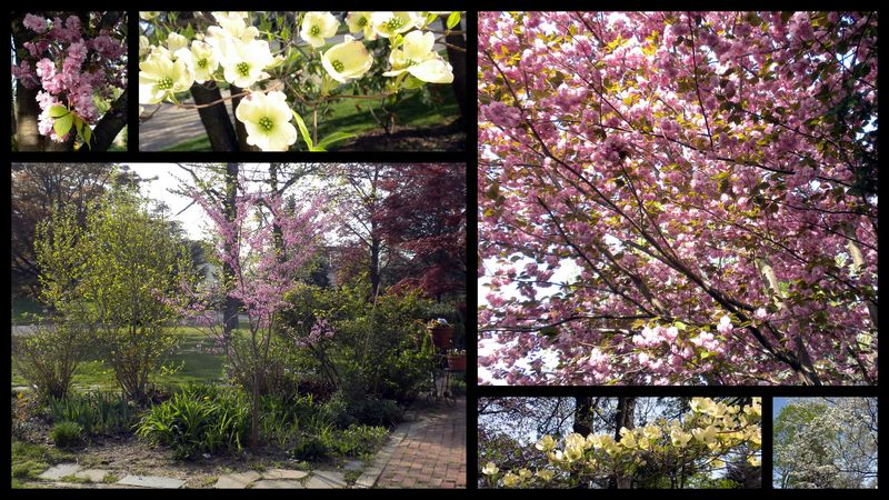 Dogwood,cherry,redbud