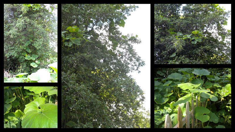 Squash in tree