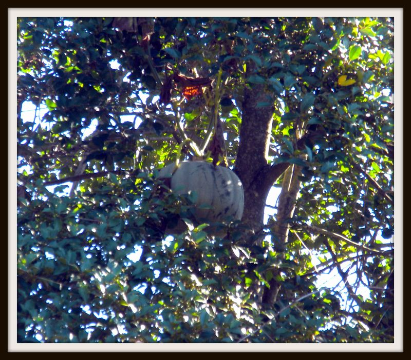 Last pumpkin in tree